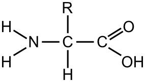 aminoacido-in-generale Proteine o protidi