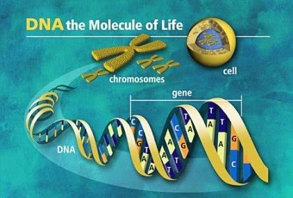 dna-molecola-della-vita Gli acidi nucleici (DNA e RNA)